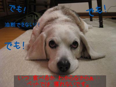 6_20081230182501.jpg