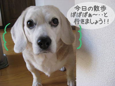 6_20090119181250.jpg