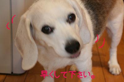 6_20090121215250.jpg