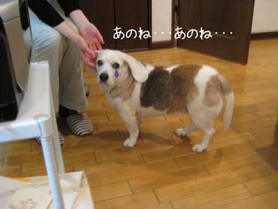 6_20090209185213.jpg