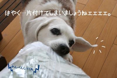 6_20090210180108.jpg