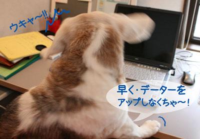 6_20090211165942.jpg