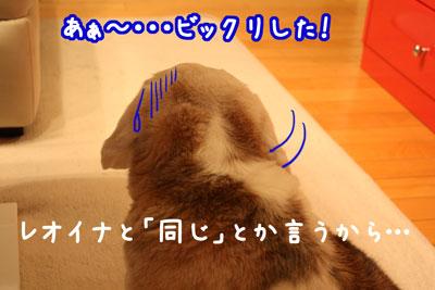 6_20090408204255.jpg