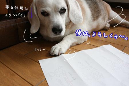 6_20090628103634.jpg