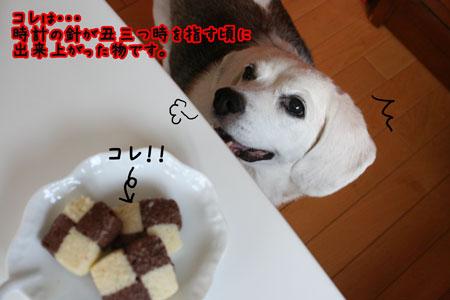 6_20090804181037.jpg