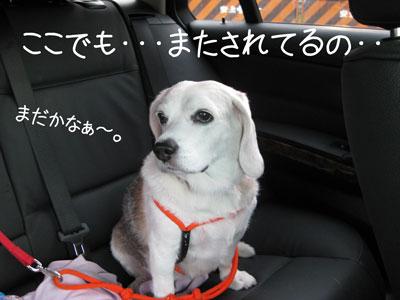 7_20081018135439.jpg