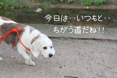 7_20081019130149.jpg