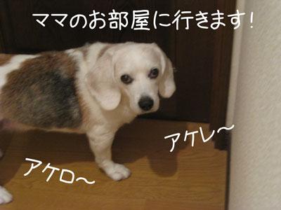 7_20081106130217.jpg