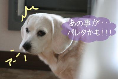 7_20081211224023.jpg