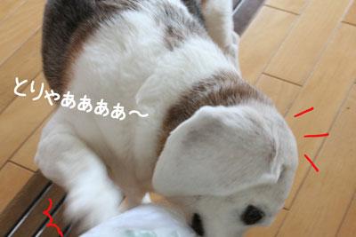 7_20090210180114.jpg