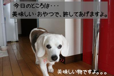 7_20090213155503.jpg