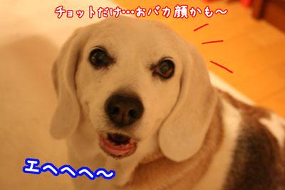 7_20090408204305.jpg