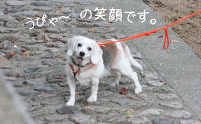 8_20081019130157.jpg