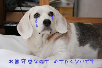 8_20081021232046.jpg