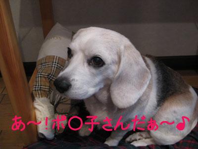 8_20081026161906.jpg