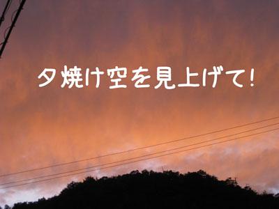 8_20081111210524.jpg