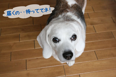 8_20081227120803.jpg