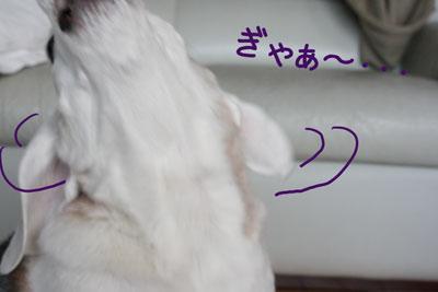 8_20090125235155.jpg