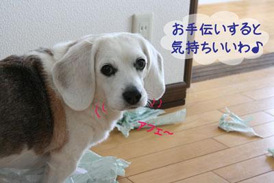 8_20090210180121.jpg