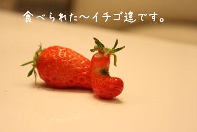 8_20090412140201.jpg