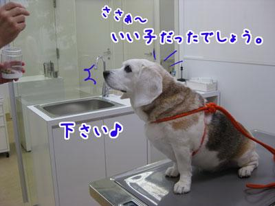 8_20090423201959.jpg