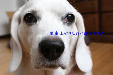 8_20090707164920.jpg