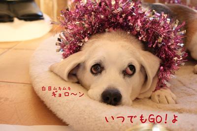 9_20081224173457.jpg