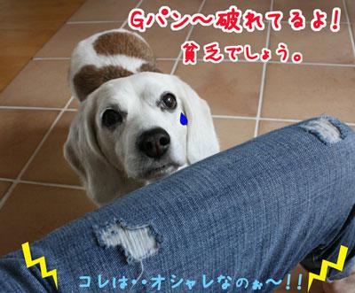 9_20090420181709.jpg
