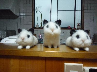 3匹の小レオ♪