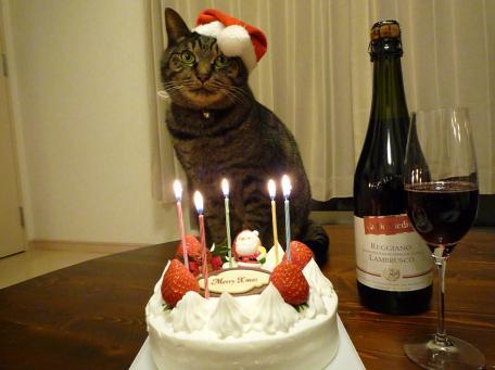 ケーキはまだかにゃ?20081224