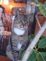 ハンビーリゾートの猫様