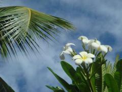ハワイの花と空