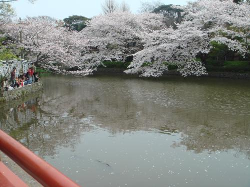 桜シーズンの池