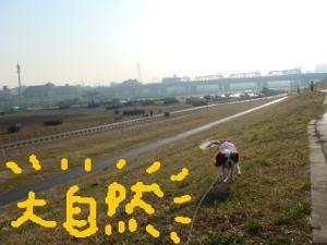 DSC00271.jpg