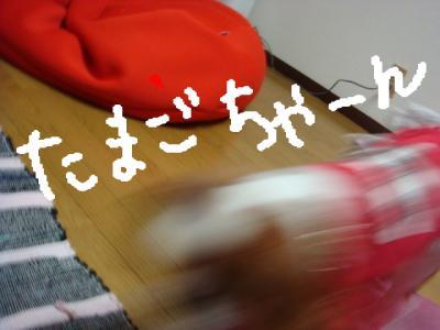 DSC00684.jpg