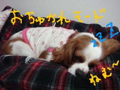 DSC01271.jpg
