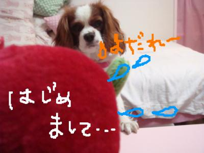 DSC01370.jpg