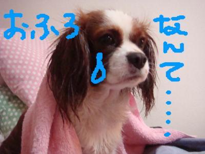 DSC01627.jpg