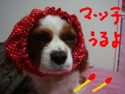 DSC01784.jpg