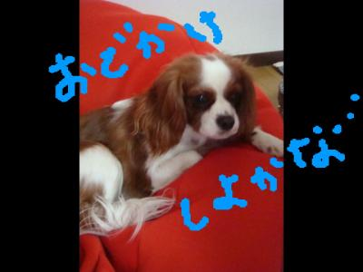 DSC01846.jpg