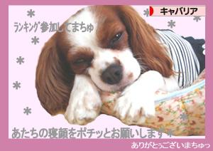 >にほんブログ村 犬ブログ キャバリアへ