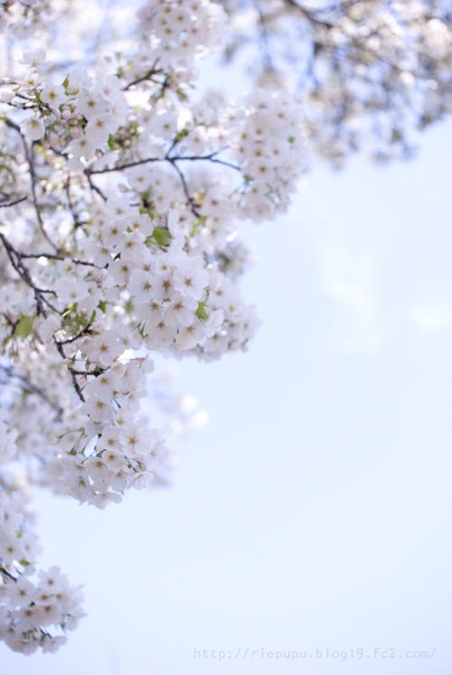 Spring came.