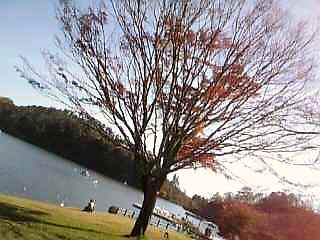 DVC湖と木