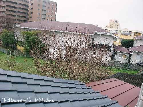 DSCF2・24うちの桜1