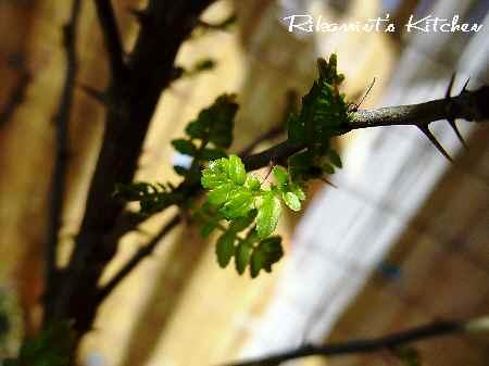 DSCF3・15木の芽