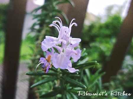 DSCF7・9ローズマリーの花