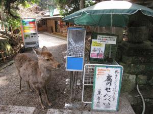 店番する鹿