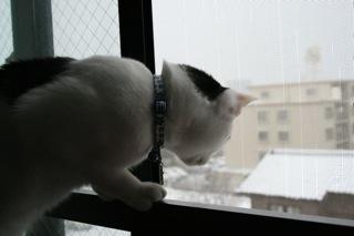 アニ、雪ふってましゅ