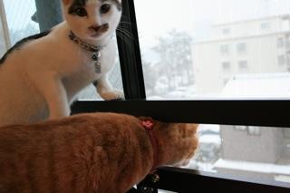 アニ、雪ふってましゅ02