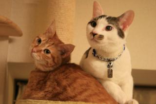 小梅&アニ、ここで猫団子